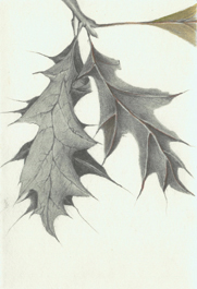 8 Pin Oak