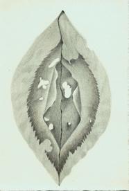 41 Crepe Myrtle