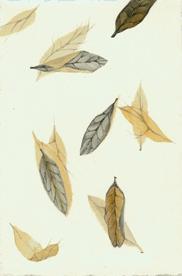 37 Thornless Golden Honey Locust