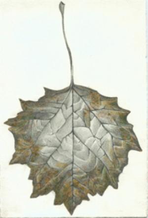 21 Lombardy Poplar